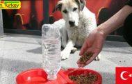 تامین غذای حیوانات خیابانی در ایام کرونا