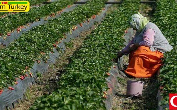 ترکیه در رده دوم اروپا در بخش کشاورزی جای گرفت