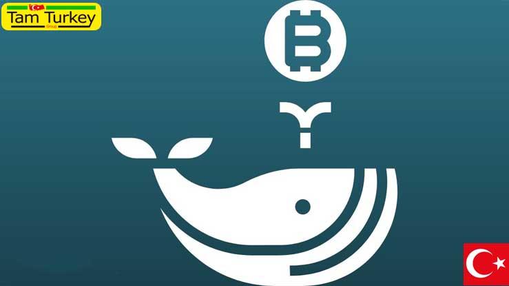 ورود 141 نهنگ جدید بیت کوین نشانگر روند صعودی ناگهانی است